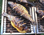 BBQ Bass
