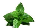 Nonalcoholic Mint Julep