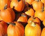 Praline Pumpkin Squares