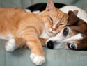 How to protect your pets from common home hazards