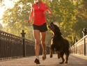 Top dog breeds for running