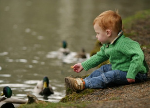 Pond/feeding ducks