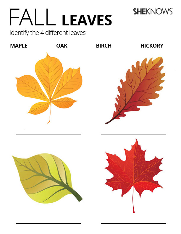 This is a picture of Simplicity Fall Leaf Printable