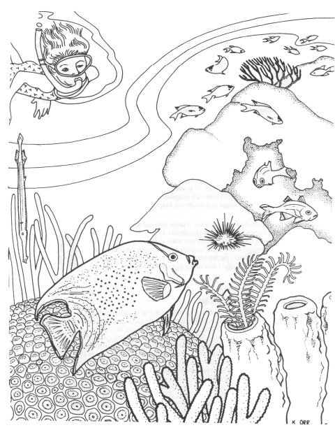 Tropical fish coloring page - Free Printable Coloring Pages