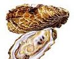 Oysters on the Half Shell with Green Peppercorn Sauce
